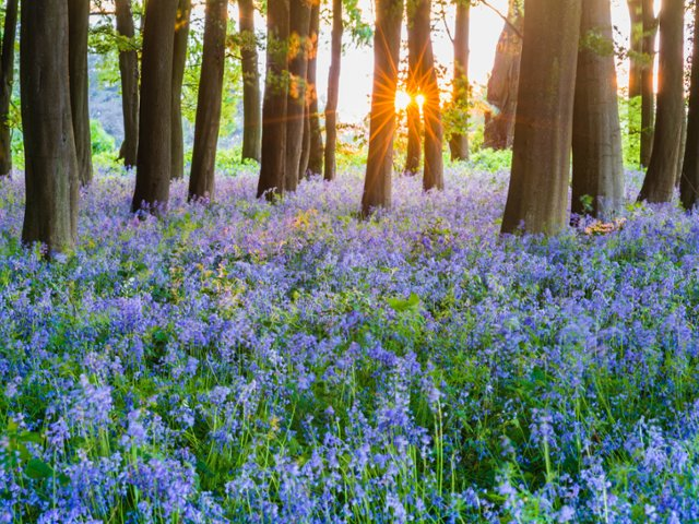 badbury-hill-oxfordshire-england